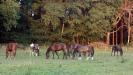 pferde02082015_1